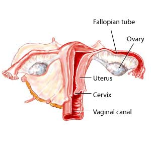 Sex after ovary removal