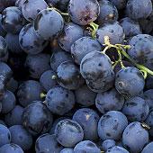 Extrait de p�pins de raisin